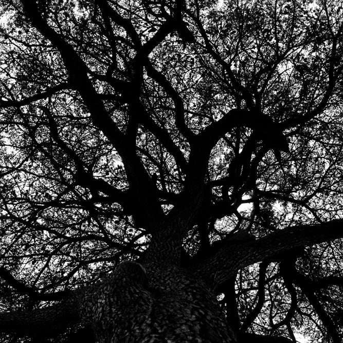 cyrille lallement - arbre